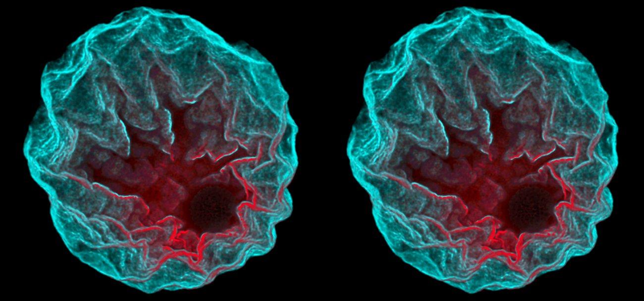 Starfish nucleus